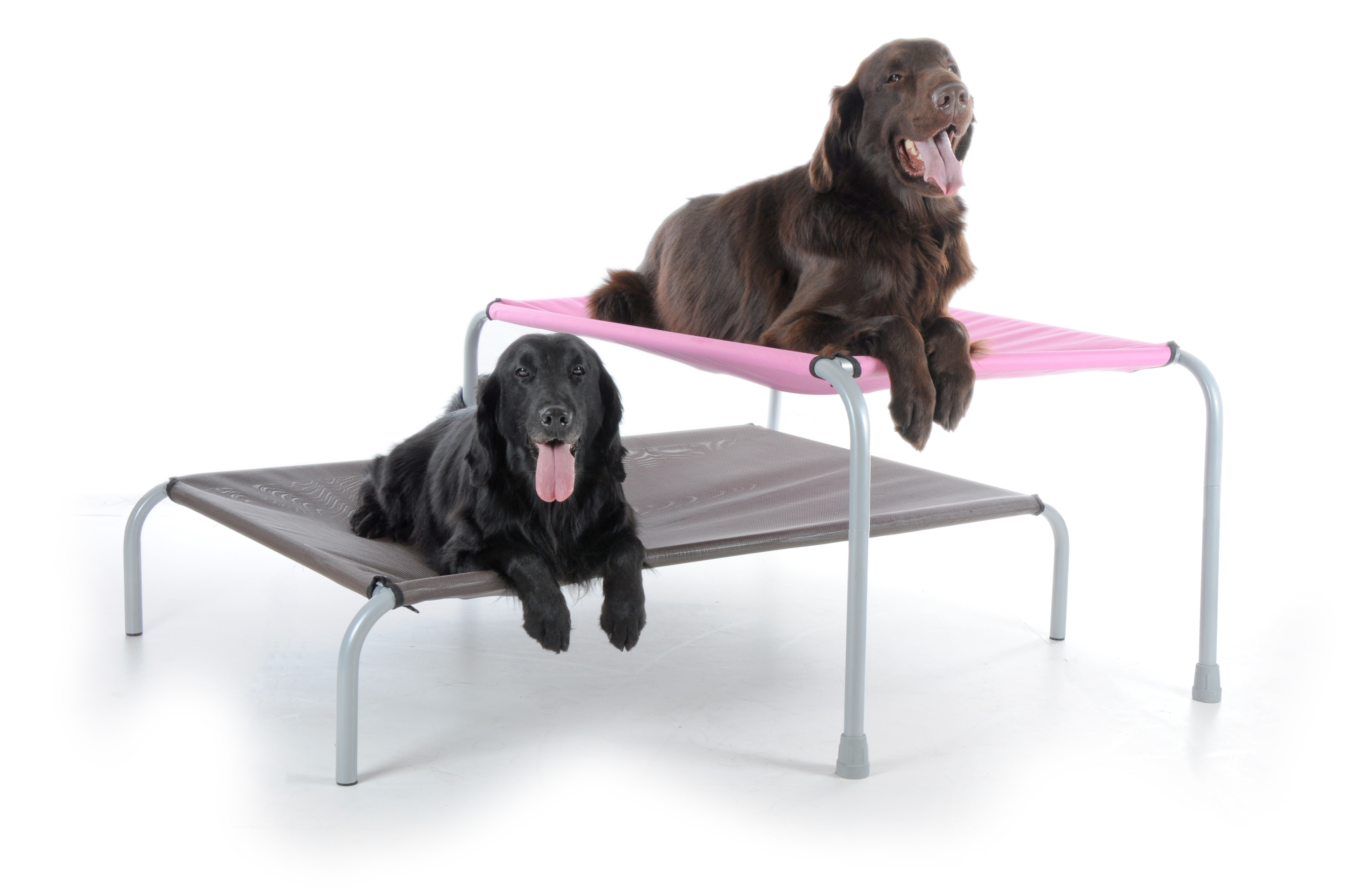 Picture of: Original Raised Dog Bunk Bed Leg Extensions Mad About A Dog